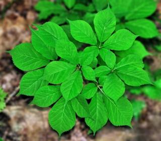 La forêt et la médecine
