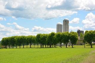 L'agroforesterie,  une technique agricole alternative et écologique
